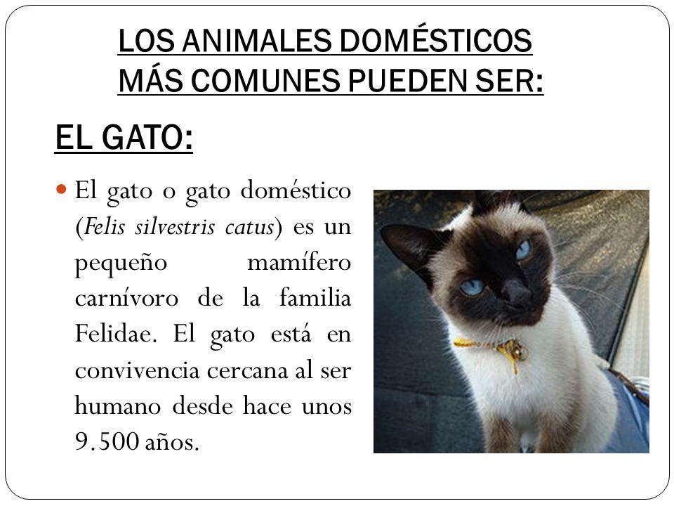 LOS ANIMALES DOMÉSTICOS MÁS COMUNES PUEDEN SER: El gato o gato doméstico (Felis silvestris catus) es un pequeño mamífero carnívoro de la familia Felid
