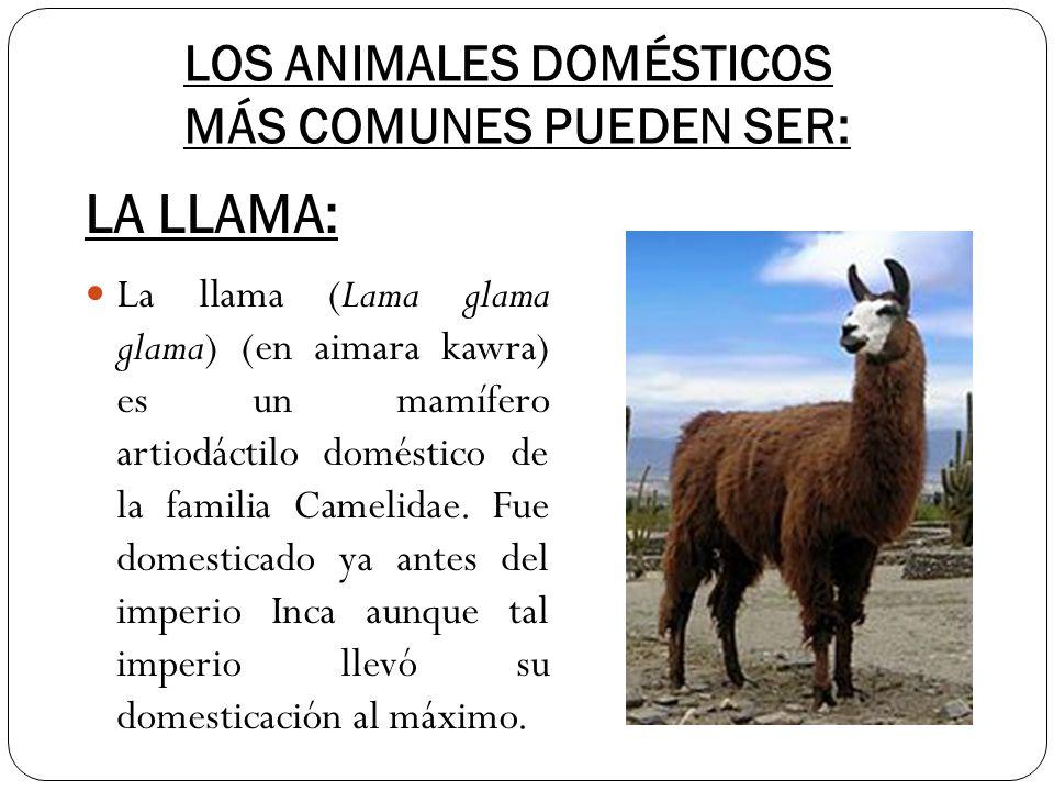 LOS ANIMALES DOMÉSTICOS MÁS COMUNES PUEDEN SER: La llama (Lama glama glama) (en aimara kawra) es un mamífero artiodáctilo doméstico de la familia Came