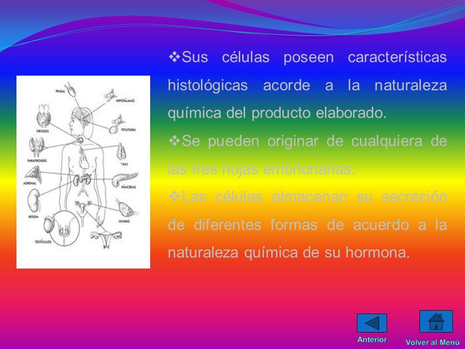 CARACTERISTICAS En este trabajo nos referiremos fundamentalmente a las células endocrinas que forman órganos (glándulas endocrinas). Las glándulas end