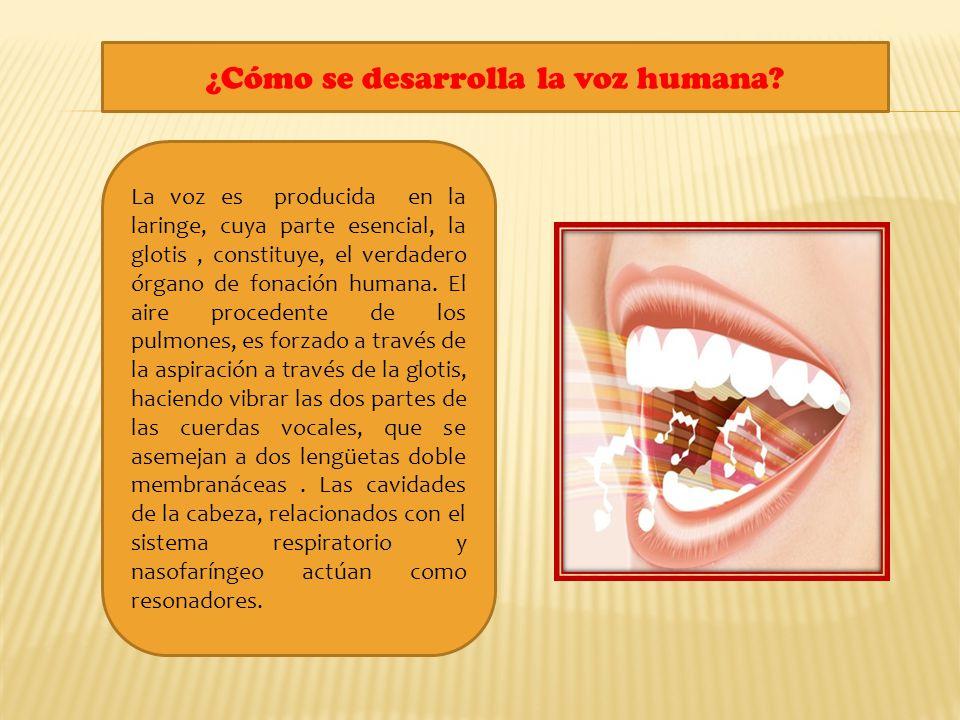 La voz es producida en la laringe, cuya parte esencial, la glotis, constituye, el verdadero órgano de fonación humana. El aire procedente de los pulmo