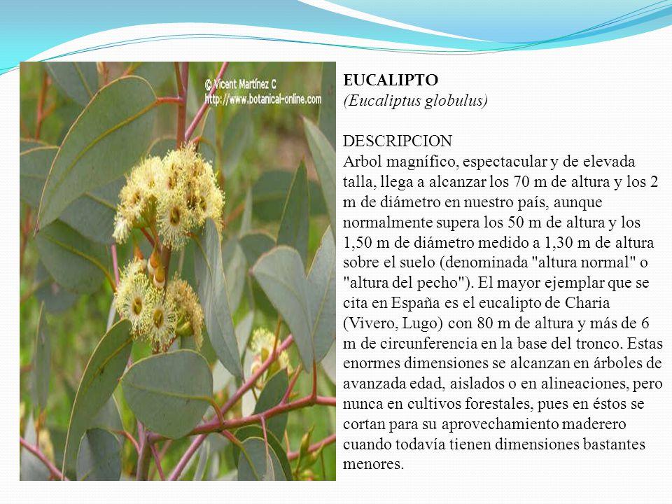 LAS PLANTAS MEDICINALES Presentado por. NOEMI RAMOS CHOQUE Profesor VICTOR RAUL MEDINA ALANOCA I E P 70 075 ACORA