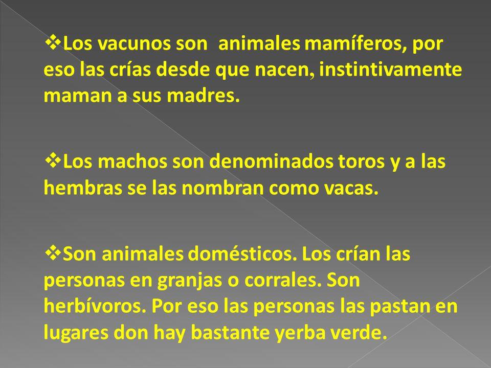 Los vacunos son animales mamíferos, por eso las crías desde que nacen, instintivamente maman a sus madres. Los machos son denominados toros y a las he