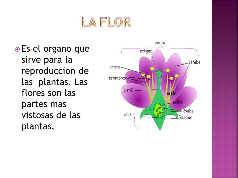 Es el organo que sirve para la reproduccion de las plantas.
