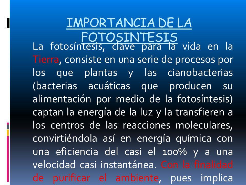 IMPORTANCIA DE LA FOTOSINTESIS La fotosíntesis, clave para la vida en la Tierra, consiste en una serie de procesos por los que plantas y las cianobact