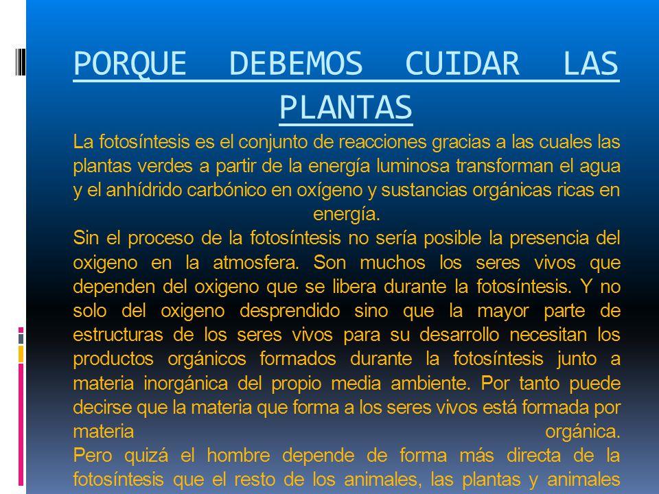 PORQUE DEBEMOS CUIDAR LAS PLANTAS La fotosíntesis es el conjunto de reacciones gracias a las cuales las plantas verdes a partir de la energía luminosa