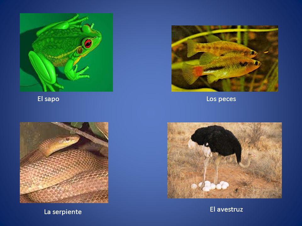 El sapoLos peces La serpiente El avestruz