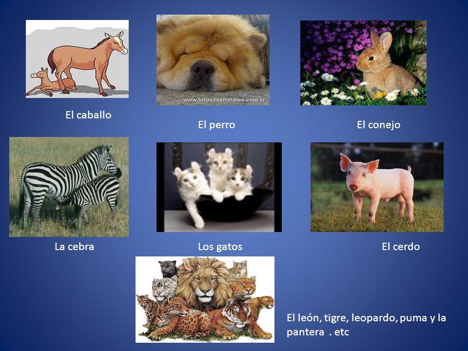 El caballo El perroEl conejo La cebraLos gatosEl cerdo El león, tigre, leopardo, puma y la pantera.