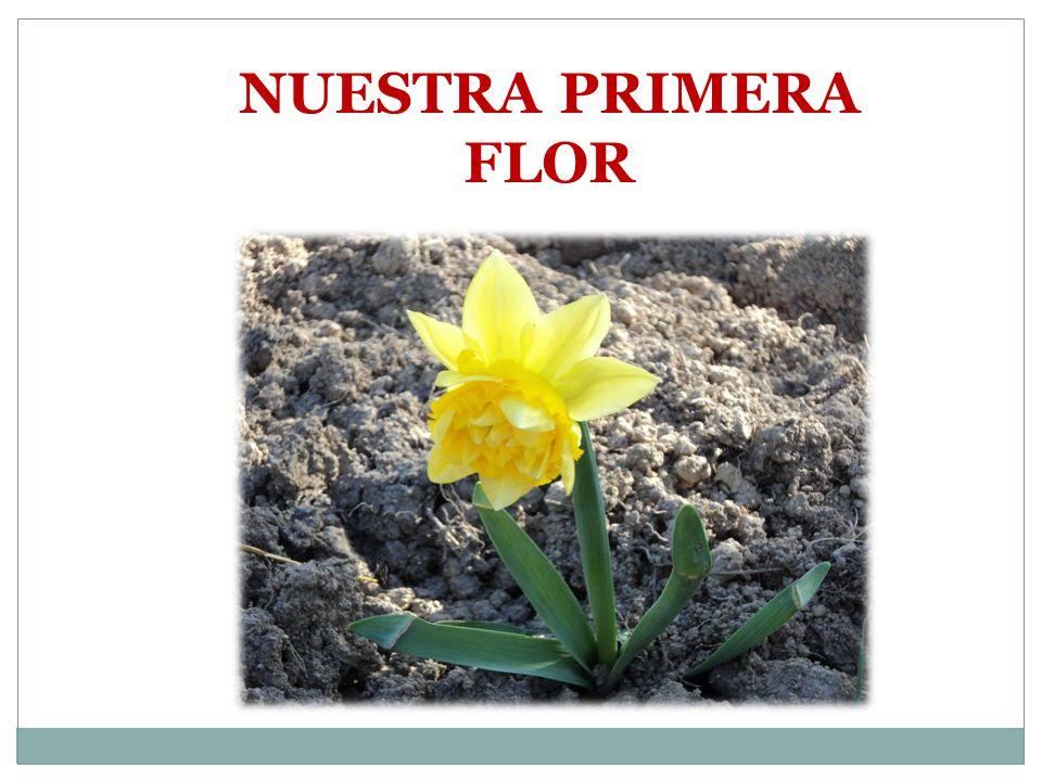 POWER POINT REFERENCIA http://irati.educacion.navarra.es/caps/infantil/attachmens/art icle/85/proyecto_urdiain_huerta_ecologica.pdf