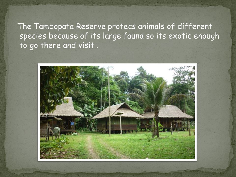 The Tambopata Reserve protecs animals of different species because of its large fauna so its exotic enough to go there and visit.