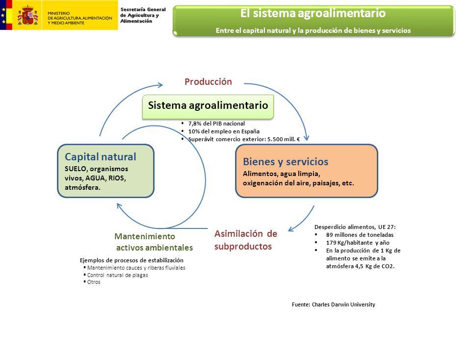 Ejemplos de procesos de estabilización Mantenimiento cauces y riberas fluviales Control natural de plagas Otros Capital natural SUELO, organismos vivo