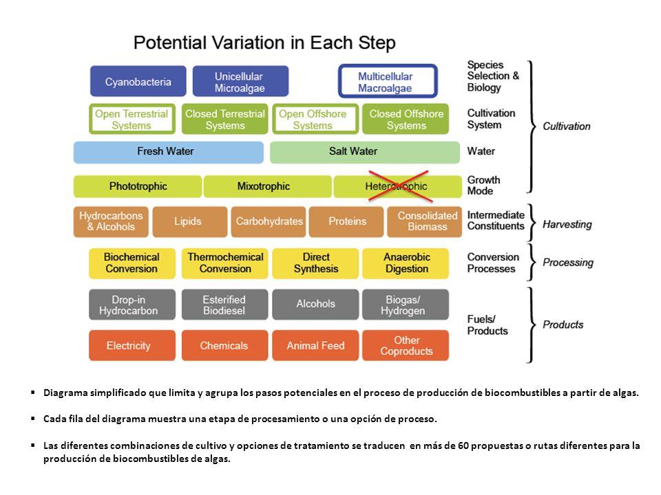 Diagrama simplificado que limita y agrupa los pasos potenciales en el proceso de producción de biocombustibles a partir de algas. Cada fila del diagra