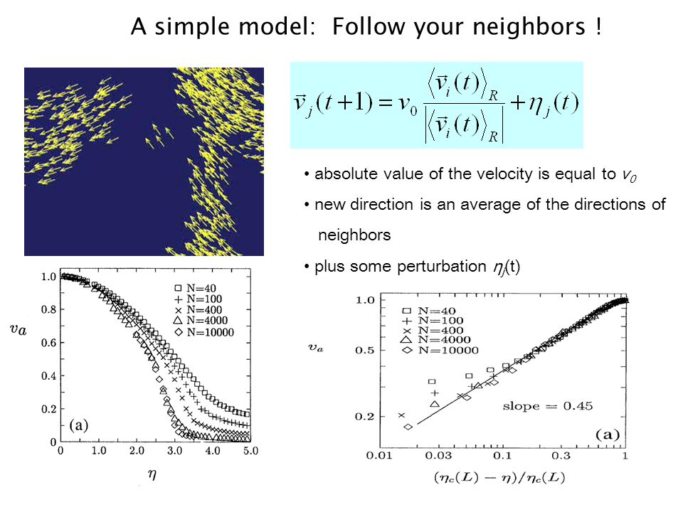 A simple model: Follow your neighbors .