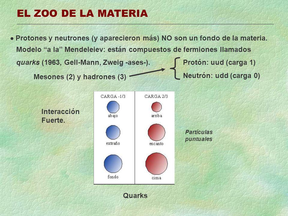 EL ZOO DE LA MATERIA Protones y neutrones (y aparecieron más) NO son un fondo de la materia. Modelo a la Mendeleiev: están compuestos de fermiones lla