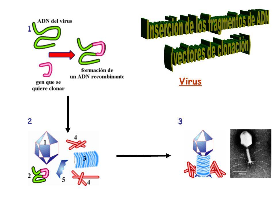 Virus 2 1 3