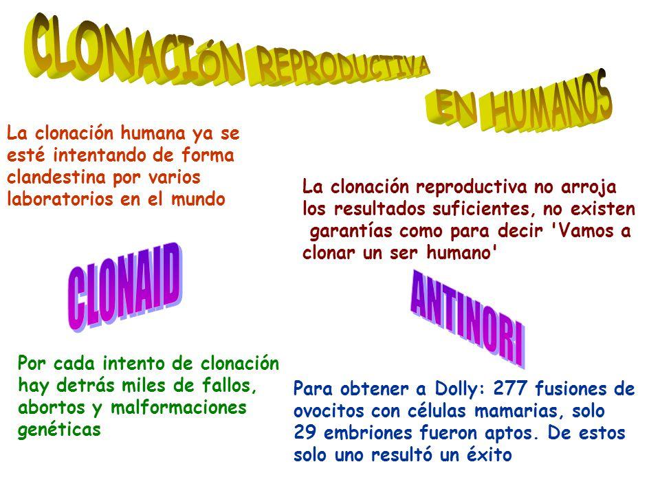 Para obtener a Dolly: 277 fusiones de ovocitos con células mamarias, solo 29 embriones fueron aptos.