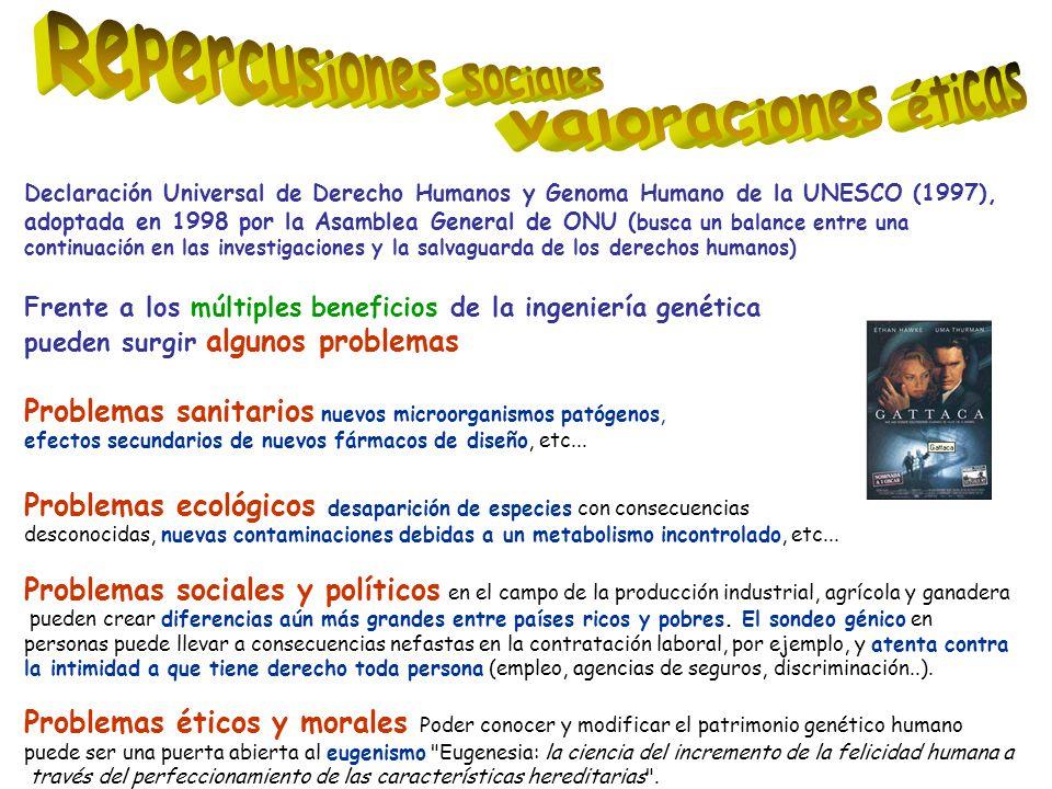 Declaración Universal de Derecho Humanos y Genoma Humano de la UNESCO (1997), adoptada en 1998 por la Asamblea General de ONU ( busca un balance entre una continuación en las investigaciones y la salvaguarda de los derechos humanos) Frente a los múltiples beneficios de la ingeniería genética pueden surgir algunos problemas Problemas sanitarios nuevos microorganismos patógenos, efectos secundarios de nuevos fármacos de diseño, etc...
