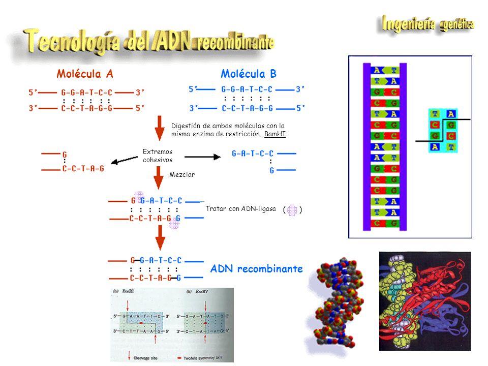 Obtención de proteínas de interés médico, comercial, etc...
