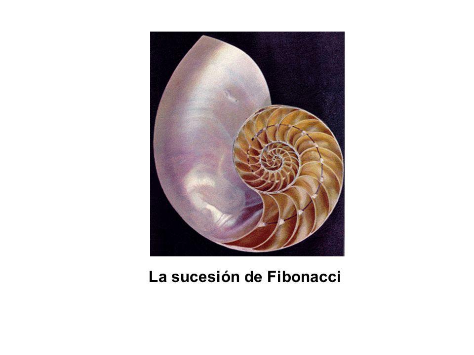 Serie de Fibonacci Leonardo de Pisa (1170-1250) fue un matemático italiano famoso por la invención de la sucesión de Fibonacci, surgida como consecuencia del estudio del crecimiento de las poblaciones de conejos, y por popularizar el sistema decimal en Europa.