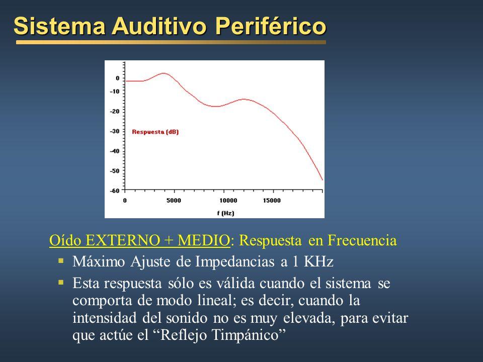 Oído EXTERNO + MEDIO: Respuesta en Frecuencia Máximo Ajuste de Impedancias a 1 KHz Esta respuesta sólo es válida cuando el sistema se comporta de modo lineal; es decir, cuando la intensidad del sonido no es muy elevada, para evitar que actúe el Reflejo Timpánico Sistema Auditivo Periférico