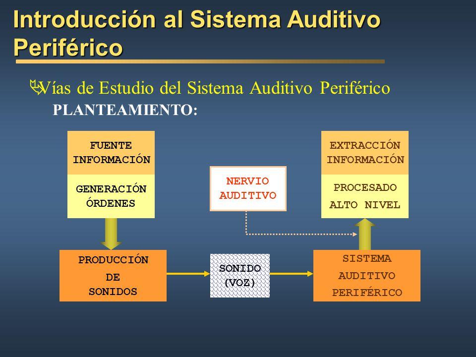 Introducción al Sistema Auditivo Periférico Vías de Estudio del Sistema Auditivo Periférico Anatomía y Fisiología del Oido ÓRGANOS QUE INTERVIENEN EN LA PERCEPCIÓN: Descripción FUNCIONES ASOCIADAS A ESOS ÓRGANOS: Como Señales y Sistemas Percepción de Sonidos LIMITACIONES DEL CONOCIMIENTO FÍSICO COMPORTAMIENTOS DIFÍCILES DE MODELAR: No Linealidades Enmascaramiento de Sonidos