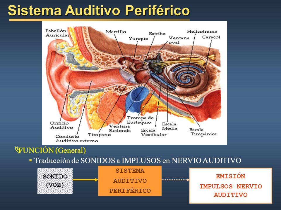 Sistema Auditivo Periférico FUNCIÓN (General) Traducción de SONIDOS a IMPLUSOS en NERVIO AUDITIVO SONIDO (VOZ) SISTEMA AUDITIVO PERIFÉRICO EMISIÓN IMPULSOS NERVIO AUDITIVO