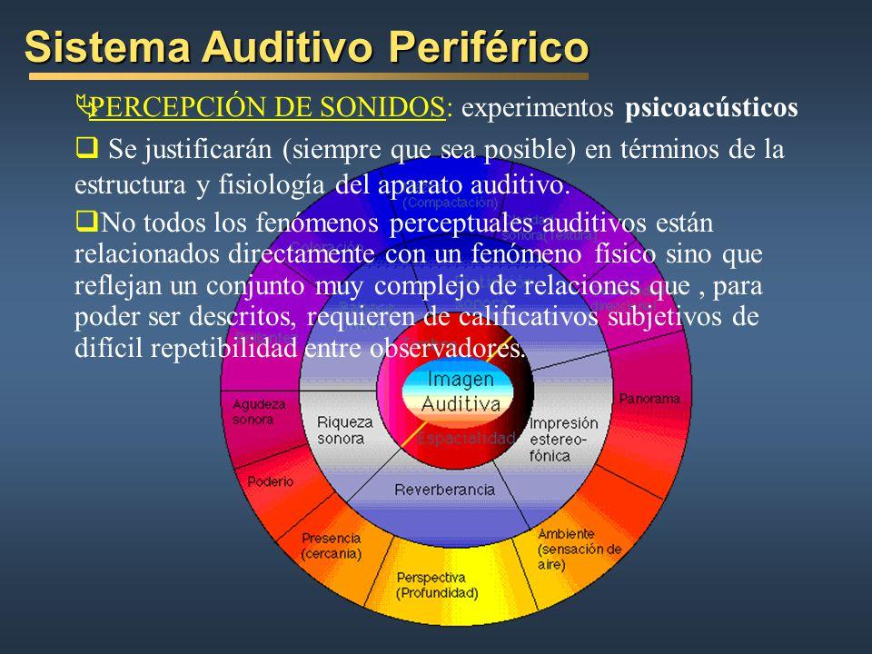 Sistema Auditivo Periférico PERCEPCIÓN DE SONIDOS: experimentos psicoacústicos Se justificarán (siempre que sea posible) en términos de la estructura y fisiología del aparato auditivo.