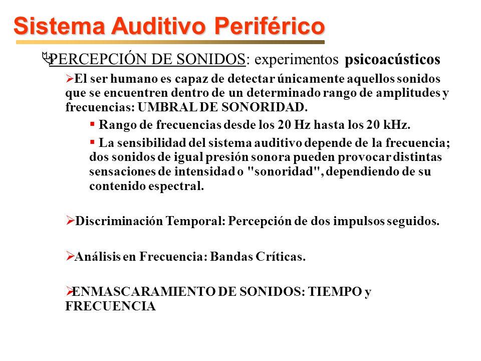 Sistema Auditivo Periférico PERCEPCIÓN DE SONIDOS: experimentos psicoacústicos El ser humano es capaz de detectar únicamente aquellos sonidos que se encuentren dentro de un determinado rango de amplitudes y frecuencias: UMBRAL DE SONORIDAD.