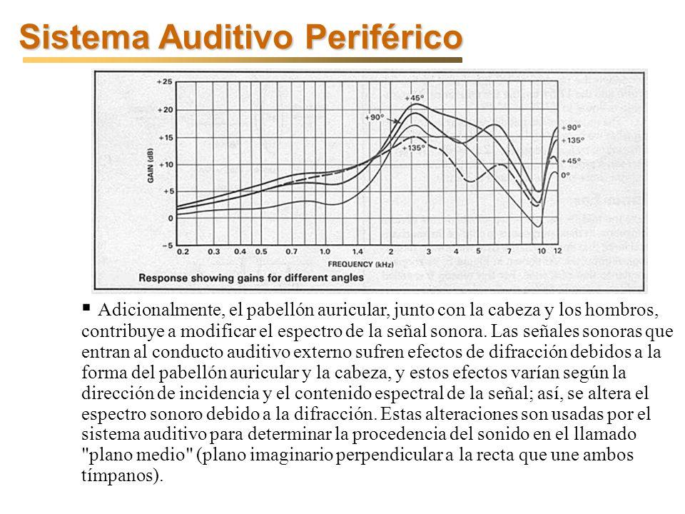 Sistema Auditivo Periférico Adicionalmente, el pabellón auricular, junto con la cabeza y los hombros, contribuye a modificar el espectro de la señal sonora.
