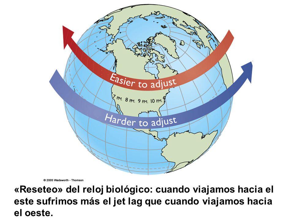 «Reseteo» del reloj biológico: cuando viajamos hacia el este sufrimos más el jet lag que cuando viajamos hacia el oeste.