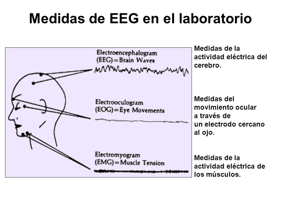 Medidas de EEG en el laboratorio Medidas de la actividad eléctrica del cerebro.
