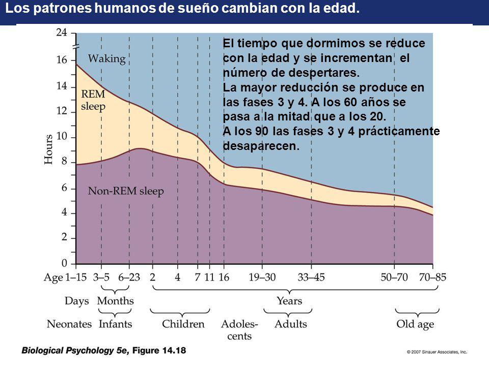 Los patrones humanos de sueño cambian con la edad.
