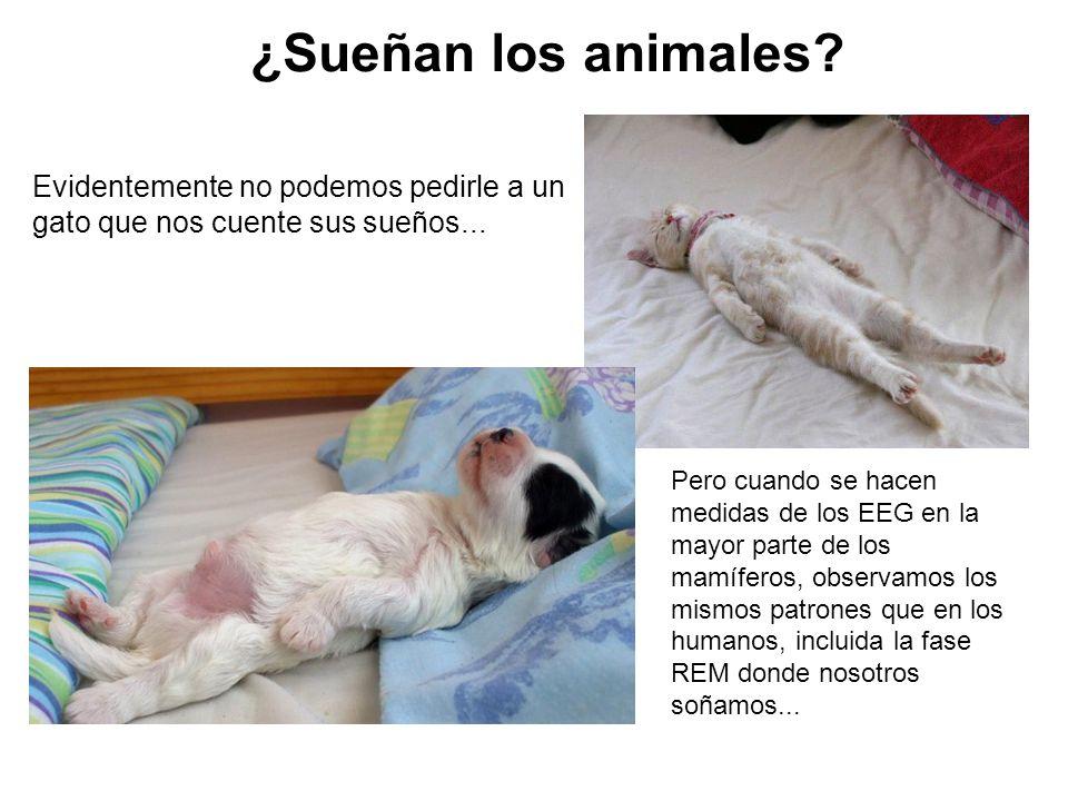 Evidentemente no podemos pedirle a un gato que nos cuente sus sueños...