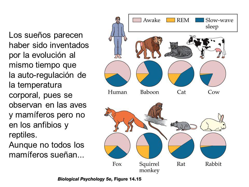 Los sueños parecen haber sido inventados por la evolución al mismo tiempo que la auto-regulación de la temperatura corporal, pues se observan en las aves y mamíferos pero no en los anfibios y reptiles.