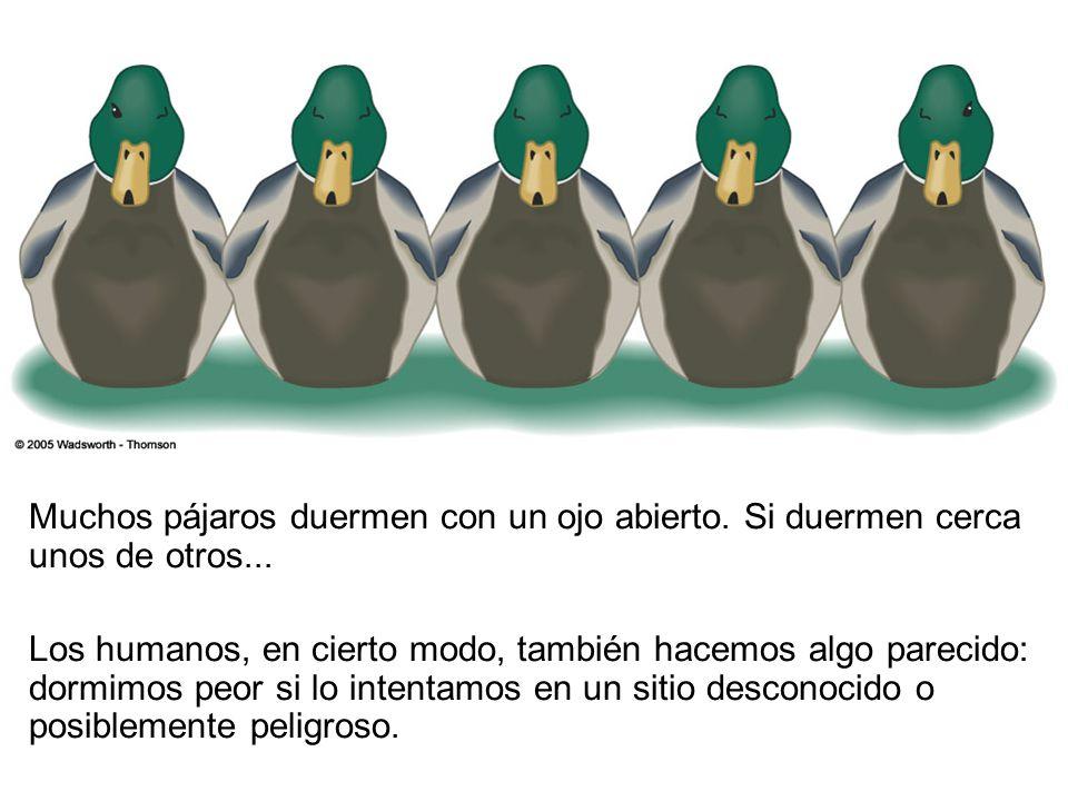 Muchos pájaros duermen con un ojo abierto.Si duermen cerca unos de otros...