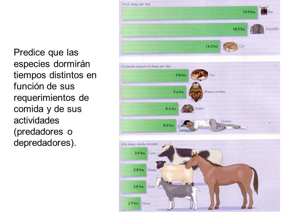 Predice que las especies dormirán tiempos distintos en función de sus requerimientos de comida y de sus actividades (predadores o depredadores).
