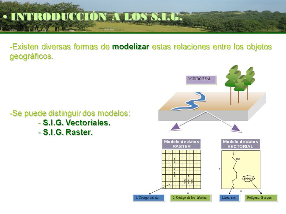 -Existen diversas formas de modelizar estas relaciones entre los objetos geográficos. -Se puede distinguir dos modelos: - S.I.G. Vectoriales. - S.I.G.