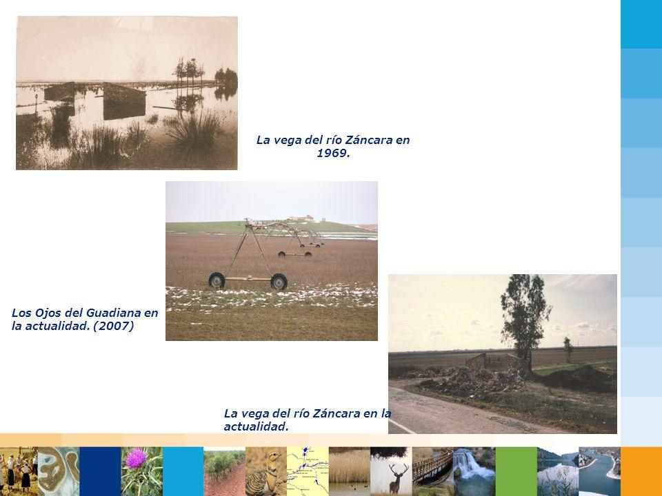 Haga clic para modificar el estilo de título del patrón Haga clic para modificar el estilo de texto del patrón Segundo nivel Tercer nivel Cuarto nivel Quinto nivel La vega del río Záncara en 1969.