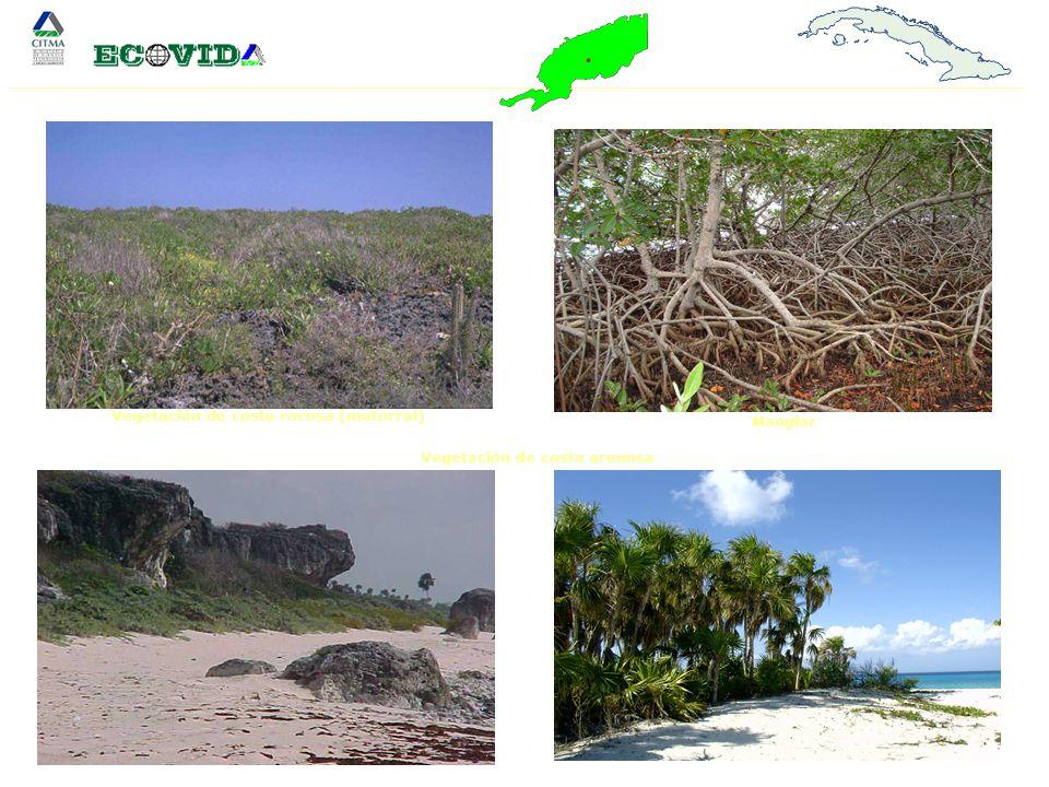 Vegetación de costa rocosa (matorral) Manglar Vegetación de costa arenosa