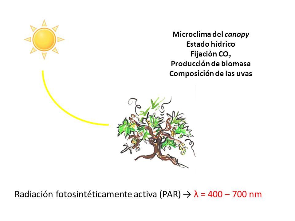 Microclima del canopy Estado hídrico Fijación CO 2 Producción de biomasa Composición de las uvas Radiación fotosintéticamente activa (PAR) λ = 400 – 7