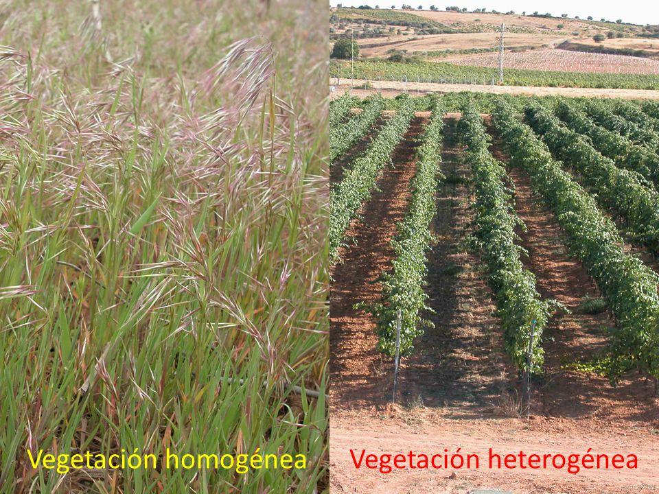 Vegetación homogénea Vegetación heterogénea