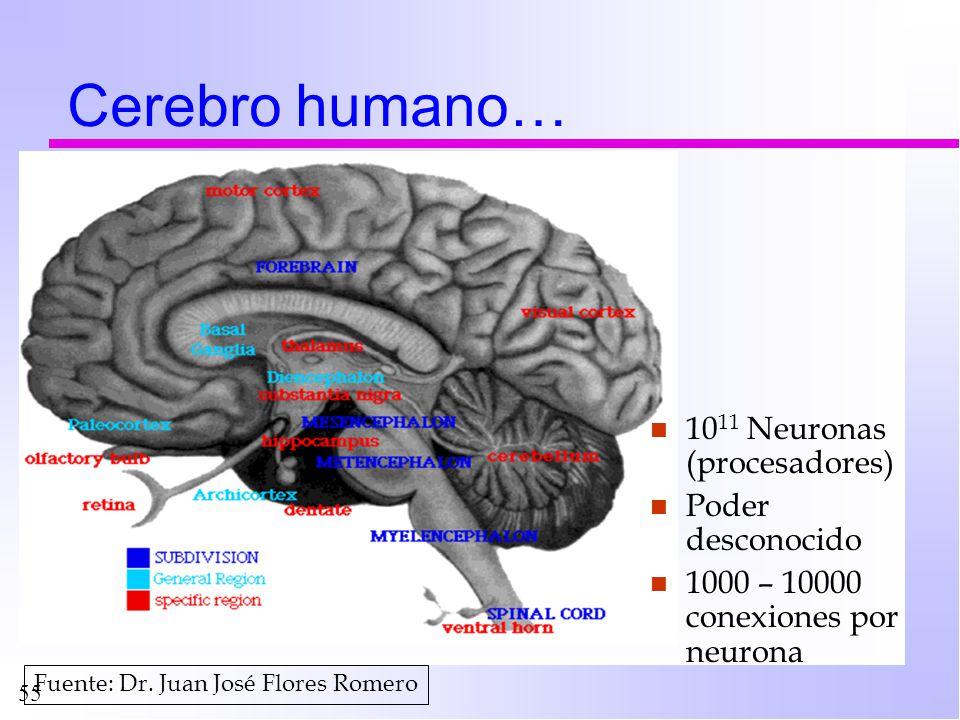 55 Cerebro humano… n 10 11 Neuronas (procesadores) n Poder desconocido n 1000 – 10000 conexiones por neurona Fuente: Dr. Juan José Flores Romero
