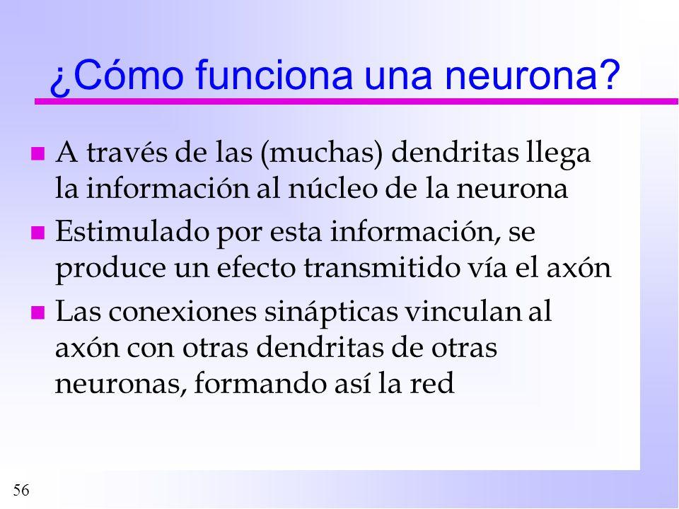 56 ¿Cómo funciona una neurona? n A través de las (muchas) dendritas llega la información al núcleo de la neurona n Estimulado por esta información, se