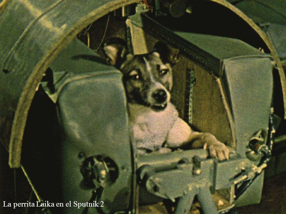 La perrita Laika en el Sputnik 2