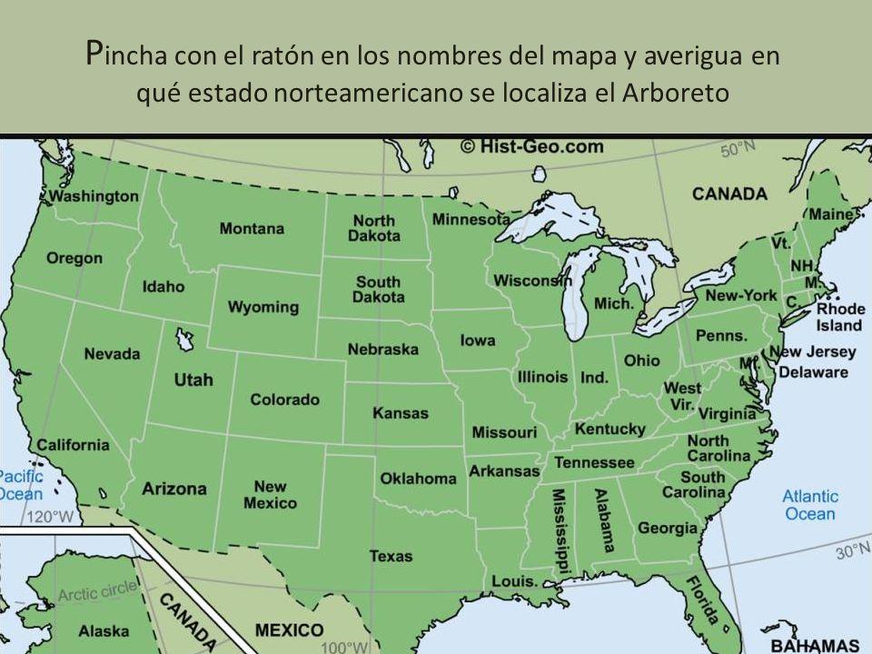 P incha con el ratón en los nombres del mapa y averigua en qué estado norteamericano se localiza el Arboreto