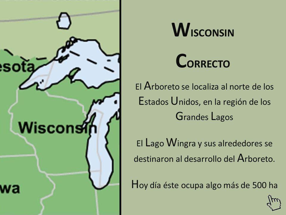 El A rboreto se localiza al norte de los E stados U nidos, en la región de los G randes L agos El L ago W ingra y sus alrededores se destinaron al desarrollo del A rboreto.
