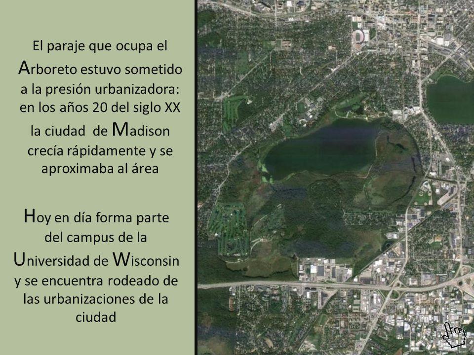 El paraje que ocupa el A rboreto estuvo sometido a la presión urbanizadora: en los años 20 del siglo XX la ciudad de M adison crecía rápidamente y se aproximaba al área H oy en día forma parte del campus de la U niversidad de W isconsin y se encuentra rodeado de las urbanizaciones de la ciudad