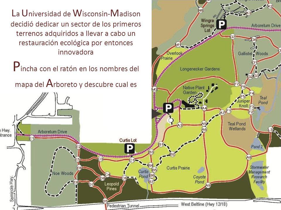 L a U niversidad de W isconsin- M adison decidió dedicar un sector de los primeros terrenos adquiridos a llevar a cabo un restauración ecológica por entonces innovadora P incha con el ratón en los nombres del mapa del A rboreto y descubre cual es