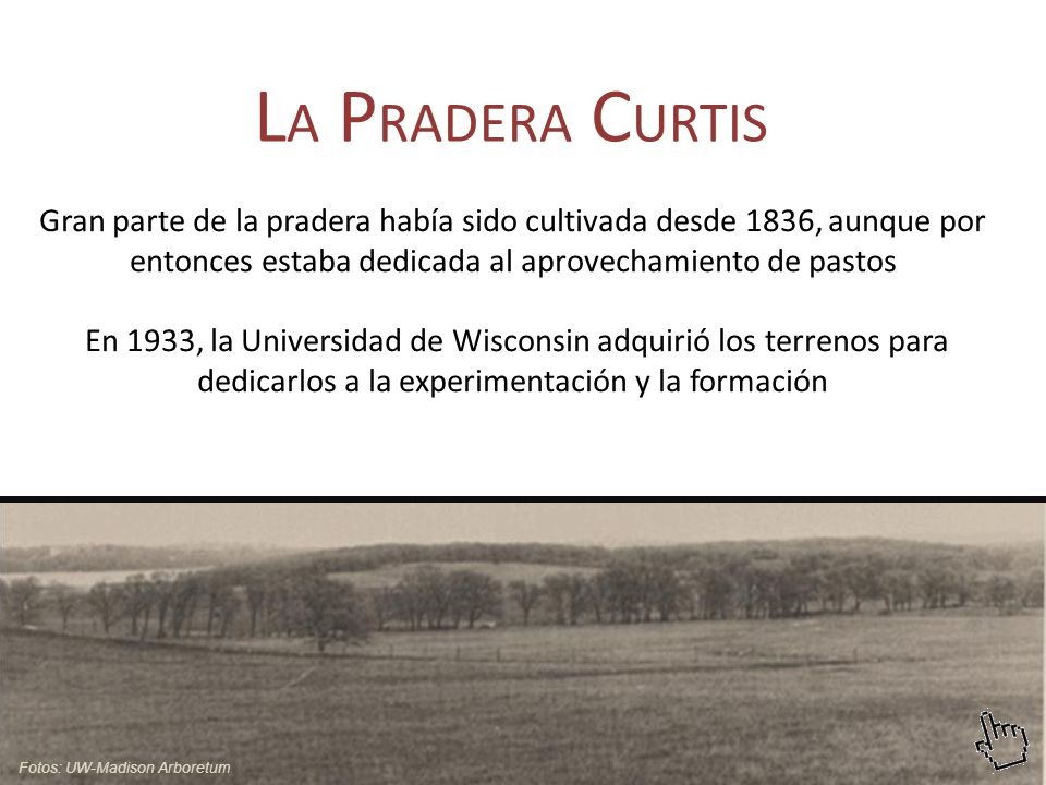 Gran parte de la pradera había sido cultivada desde 1836, aunque por entonces estaba dedicada al aprovechamiento de pastos En 1933, la Universidad de Wisconsin adquirió los terrenos para dedicarlos a la experimentación y la formación L A P RADERA C URTIS Fotos: UW-Madison Arboretum