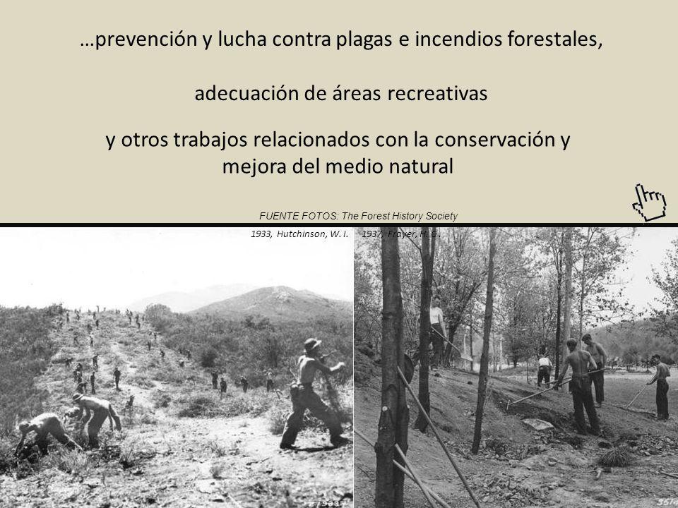 T REE A RMY este fue el sobrenombre que recibió este cuerpo civil, ya que en 10 años pudo reforestar terrenos con varios miles de millones de árboles 1930s, Desconocido 1938, Werner, W.A.