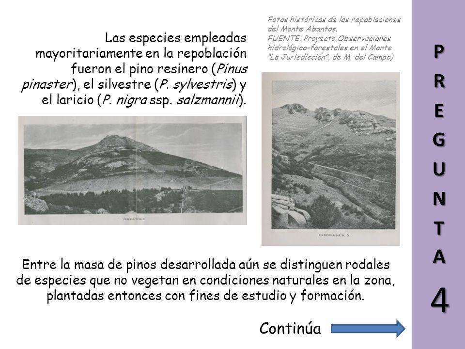 En aquellos años, el monte Abantos estaba prácticamente deforestado, consecuencia del aprovechamiento abusivo de sus recursos. La Escuela solicitó su